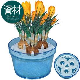クロッカス水栽培ポット(3球用)透明ブルー