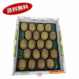 【送料無料】キウイフルーツ グリーン 約3-3.5kg 27-30玉 和歌山県★北海道、沖縄のみ別途送料が必要となります