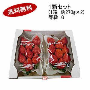 【送料無料】予約 12月中旬より出荷予定 博多 あまおう いちご 等級G 福岡県産 約270g×2パック★北海道、沖縄のみ別途送料が必要となります