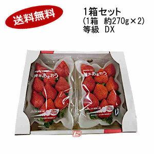 【送料無料】予約 12月中旬より出荷予定 博多 あまおう いちご 等級DX 福岡県産 約270g×2パック★北海道、沖縄のみ別途送料が必要となります