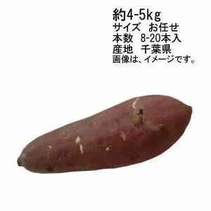 【送料無料】予約 9月上旬以降出荷予定 紅あずま さつまいも 約5kg 千葉県産 サイズ M/L★一部、北海道、沖縄のみ別途送料が必要となる場合があります