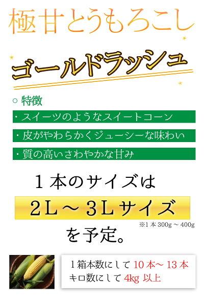 送料無料とうもろこしゴールドラッシュ熊本県産10本〜13本約4.0kgスイートコーン国産産地直送野菜夏野菜トウモロコシ茹で方レンジレシピ離乳食通販品種お取り寄せギフト