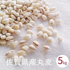 丸麦 国産 送料無料 佐賀県産 5kg 手作り味噌用 無添加 国産 大麦 はだか麦 徳用 業務用 麦麹用 合わせ味噌 麦みそ原料 送料無料 あす楽
