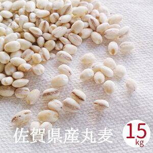 丸麦 国産 送料無料 佐賀県産 15kg 手作り味噌用 無添加 国産 大麦 はだか麦 徳用 業務用 麦麹用 合わせ味噌 麦みそ原料 送料無料 あす楽