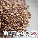 もち麦 国産 送料無料 500g 愛媛県産 無添加 ダイシモチ 紫もち麦 麦ご飯 国産 大麦 雑穀 国産雑穀 メール便 送料無料…