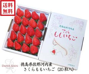 【送料無料】徳島産 さくらもも いちご 化粧箱 高級 フルーツ 果物 ギフト 自家用 プレゼント [お供え] [お見舞い] [御礼] [お祝い] [内祝い] [贈り物][ひな祭り]