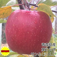 青森県産葉とらずりんご