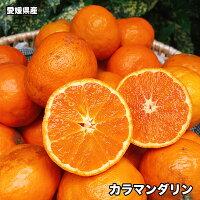 愛媛県産カラマンダリン(春みかん)