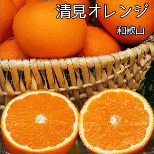 清見 オレンジ 送料無料 和歌山県産 清見 オレンジ 秀品 Lサイズ 5Kg ギフト 贈答用 清見タンゴール