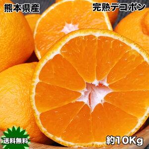 送料無料 本家 熊本県産 完熟 デコポン 10kg ギフト 光糖度センサー検査済 糖度保証 クール便配送