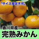 【わけあり】香川県産完熟みかん 約10kg サイズ指定不可【RCP】