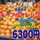 カリフォルニア ネーブル オレンジ