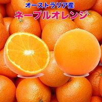 オーストラリア産ネーブルオレンジ