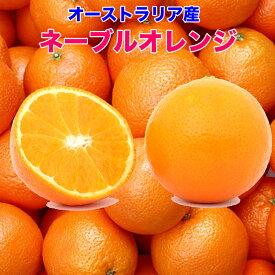 オレンジ ネーブル 送料無料 オーストラリア産 ネーブルオレンジ 10kg 糖度保証 44玉前後