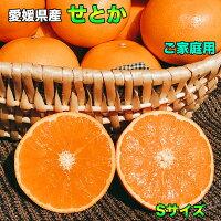 話題の柑橘愛媛県産せとか