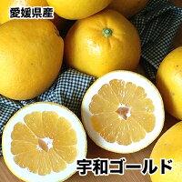初夏の味愛媛県産宇和ゴールド