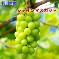 岡山県産シャインマスカット希少品種
