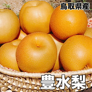 鳥取県産 豊水 梨 5kg 8〜20玉 送料無料 お試し 訳あり 梨 豊水 敬老の日 ギフト