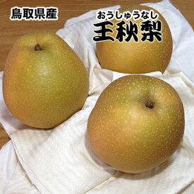 梨 なし ナシ 5kg 送料無料 鳥取県産 王秋 梨 5kg 青秀クラス 梨 なし おうしゅう 5Kg お歳暮 ギフト