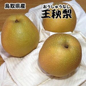 送料無料 鳥取県産 王秋 梨 5kg 赤秀クラス 梨 なし おうしゅう 5Kg お歳暮 ギフト