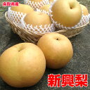 鳥取県産 新興 梨 秀品 5kg 8〜12玉 贈答用 梨 なし 5Kg ギフト 送料無料 お歳暮 ギフト