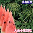 鳥取県産 大栄 小玉西瓜 2kg 送料無料 鳥取県 西瓜 大栄 すいか 小玉西瓜 ギフト 敬老の日