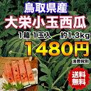 【送料無料】鳥取県産大栄小玉西瓜 約1.3kg 【RCP】※北海道・沖縄県離島へは別途送料必要