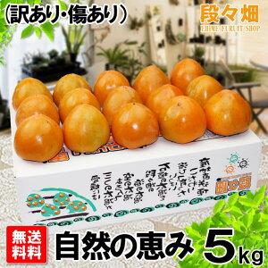 愛媛県産 富士柿 自然の恵み 5kg (訳あり・傷あり)