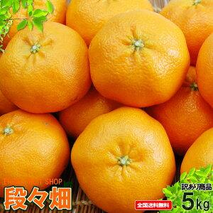 愛媛県産 甘平 自然の恵み(傷あり・訳あり)5kg