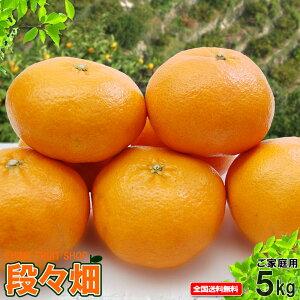愛媛県産 甘平(かんぺい) ご家庭用5kg