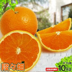 愛媛県産 清見 ギフト用10kg