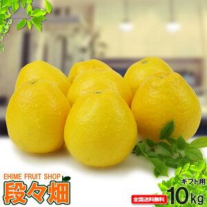 愛媛県産 ジューシーオレンジ ギフト用 10kg