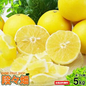 愛媛県産 ニューサマーオレンジ ギフト用5kg