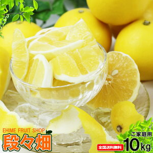 愛媛県産 ニューサマーオレンジ ご家庭用10kg