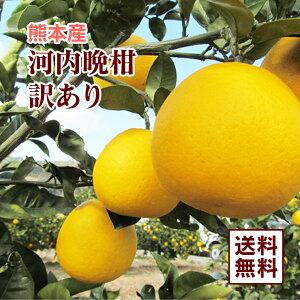 【 送料無料 】 熊本産 訳あり 河内晩柑 10kg 【 九州 熊本 みかん 柑橘 晩柑 ジューシー オレンジ 】
