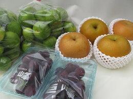 【送料無料】九州熊本産フルーツセット≪旬の果物3〜5品セット≫朝食やデザート、スムージーなど、いつも果物を楽しみたい方へ【九州熊本野菜果物セット詰め合わせお取り寄せギフト母の日父の日お中元お歳暮贈答】