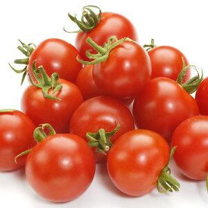熊本産 ミニトマト 1パック 約150g 【 野菜セット同梱で送料無料 九州 熊本 野菜 とまと ミニ プチ トマト 実 】