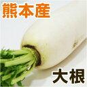 ■ 熊本県産 大根 / だいこん ■ 1本 【野菜セット同梱で送料無料】【九州 野菜 ダイコン 根菜 ダイエット 】