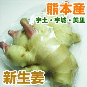 ■ 熊本県産 新生姜 約100g ■ 【 野菜セットと同梱で送料無料 九州 熊本 野菜 ショウガ しょうが 薬味 根菜 新 焼 生 そうめん 温 脂肪 】