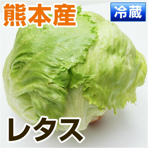 ■ 熊本・九州産 レタス ■ 1玉(400〜500g)【 野菜セット同梱で送料無料 九州 野菜 れたす 緑黄色 葉物 玉 球 生 サラダ 】