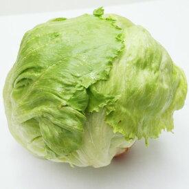 熊本・九州産 レタス 1玉(400〜500g)【 野菜セット同梱で送料無料 九州 熊本 野菜 れたす 緑黄色 葉物 玉 球 生 サラダ 】