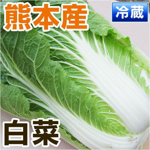 ■熊本県産 白菜■ 1本 【野菜セット同梱で送料無料】【九州 野菜】【はくさい】【ハクサイ】