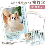 喪中はがき10枚セット喪中はがき名入れ印刷写真入りペット犬猫オーダーメイド私製はがきデザイン7種かわいいきれいオリジナル