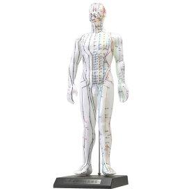 【代引き・同梱不可】人体模型シリーズ けいけつくんII(WHO新規格対応経絡経穴鍼灸模型)見本 医療 整骨院