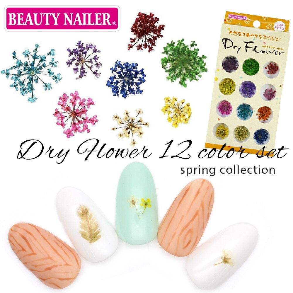BEAUTY NAILER(ビューティーネイラー) ドライフラワー 12色セット コゴメナデシコ [DRF-3] 押し花ネイル 春ネイル 花柄 フラワー ジェルネイル レジン ネイルアート