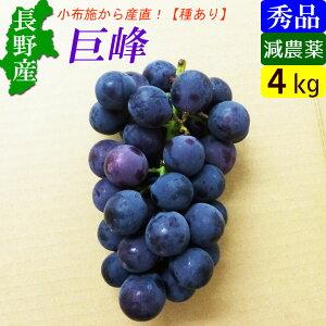 【送料無料】 長野産 特選 巨峰 4kg前後 甘くて美味しいぶどう!