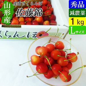【送料無料】 山形産 減農薬さくらんぼ 秀品 Lサイズ 1kg 佐藤錦
