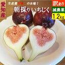 愛知県産 朝獲れイチジク 1.2kg(300g×4パック) 訳あり 減農薬 家庭用【送料無料】