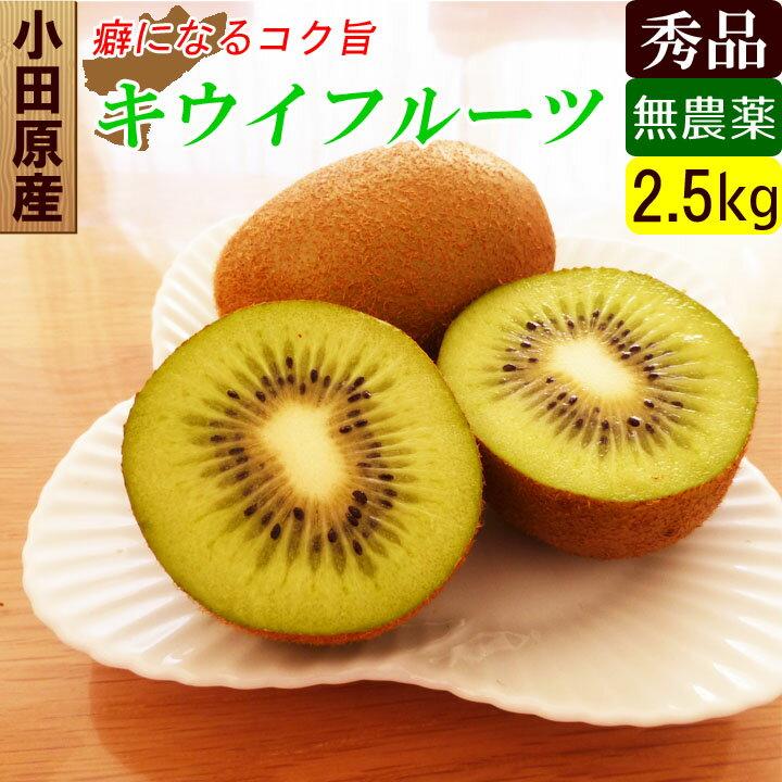 【送料無料】 国産 無農薬 キウイ 2.5kg オーガニック キウイフルーツ ダイエット・スムージー用にも!