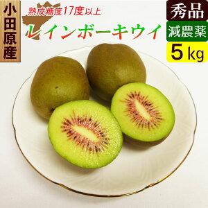 小田原産 レッドキウイ 減農薬 5kg レインボーレッド 希少なキウイフルーツ【送料無料】